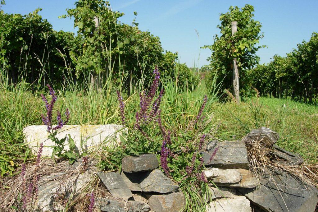 Granite rocks in the Kremsleithen vineyard